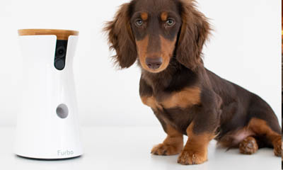 Win 1 of 4 Furbo Treat Tossing Pet Cameras